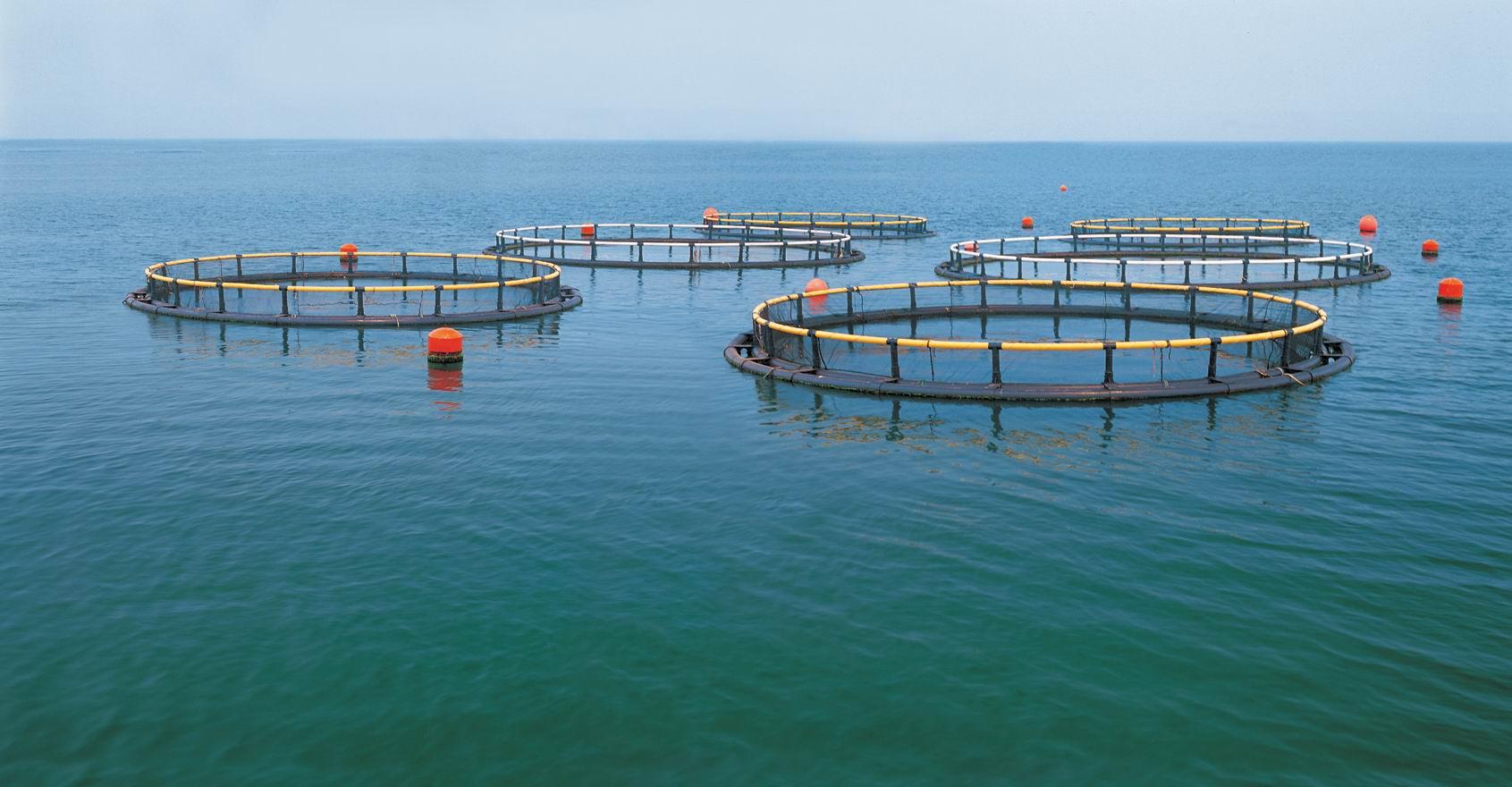 三丁酸甘油酯在水产养殖的应用